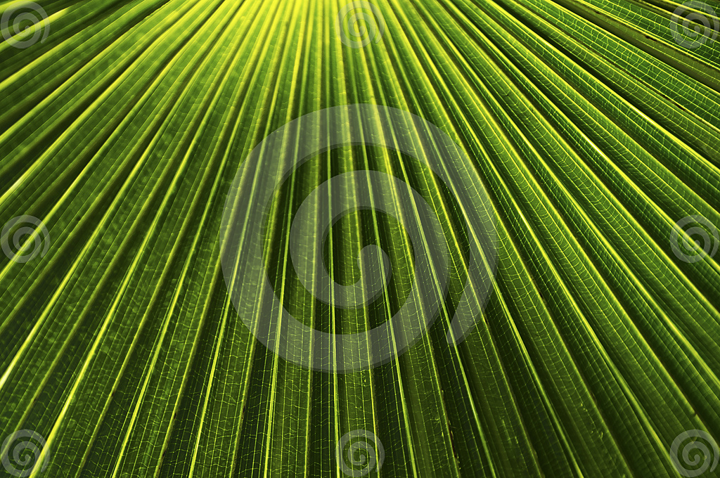 Picture of palm leaf pattern