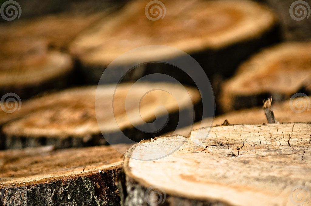 Picture of cutted treetrunks